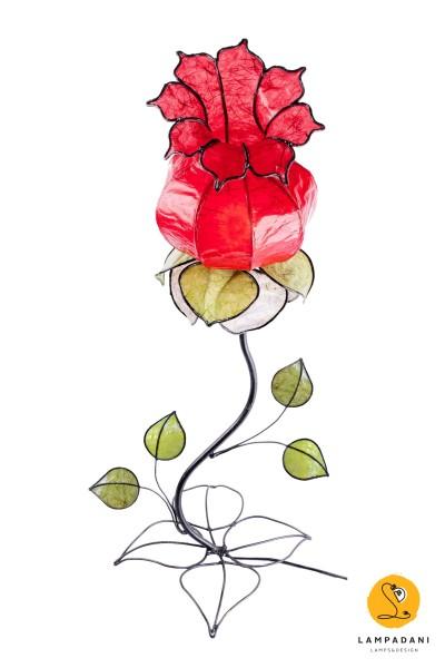 Bocciolino-alto rosso